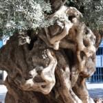 IMG 1022 150x150 Palma de Mallorca